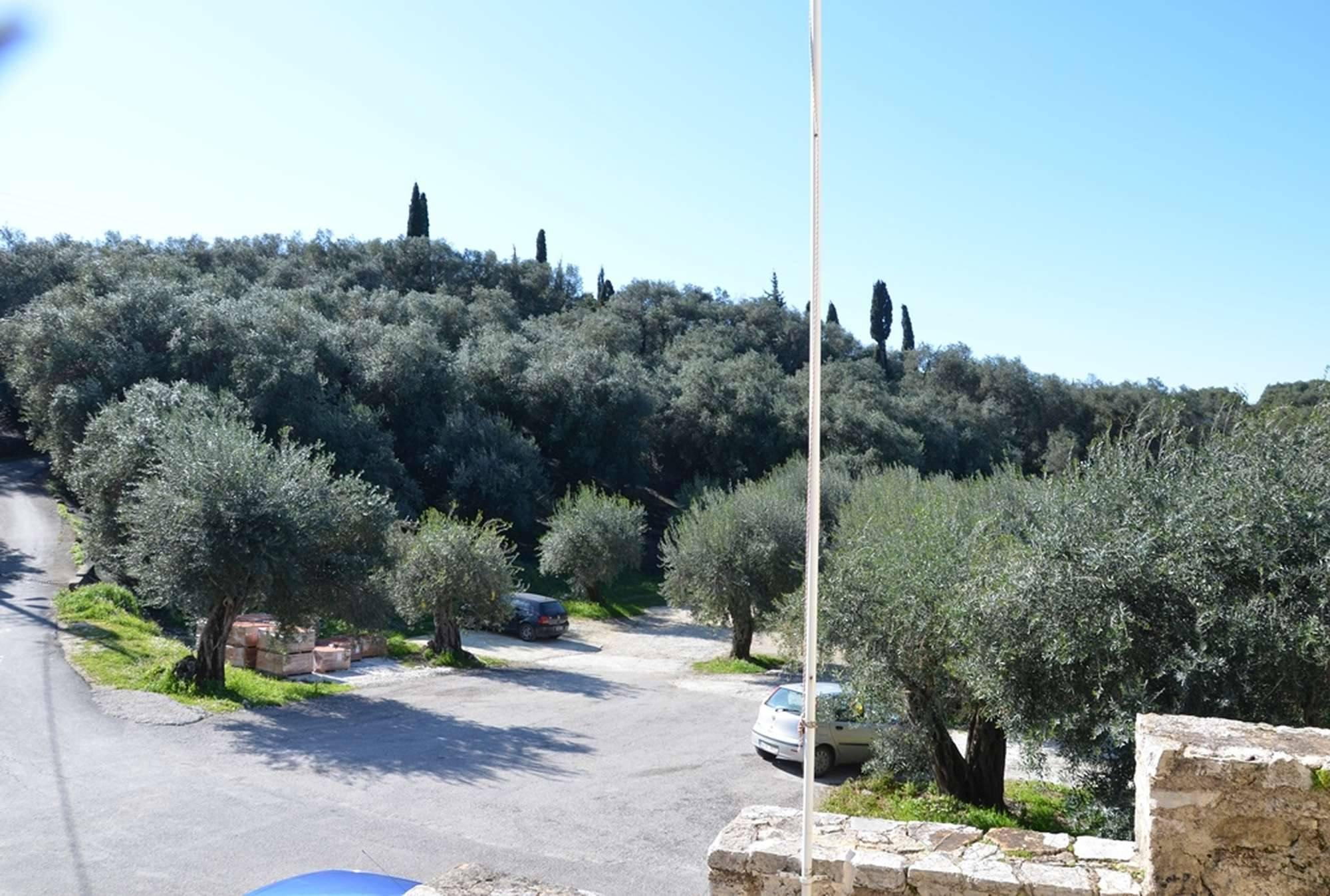 Оливковая роща монастыря Пантократор